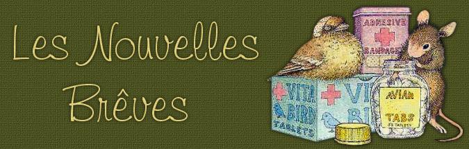 La maison des animaux les news for Abces gencive traitement maison